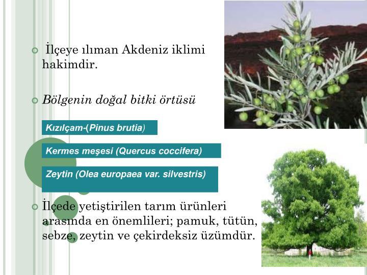 leye lman Akdeniz iklimi hakimdir.