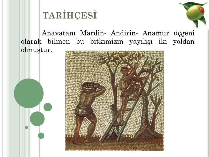 TARHES