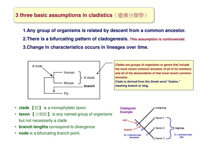 3 three basic assumptions in cladistics