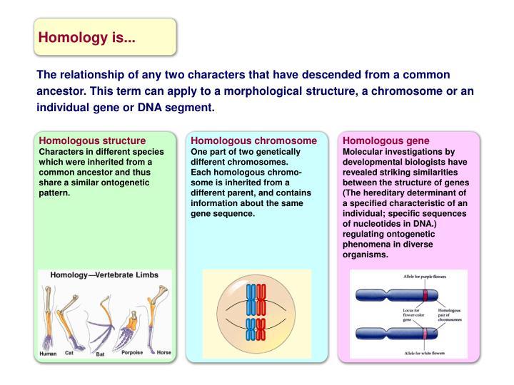 Homologous gene