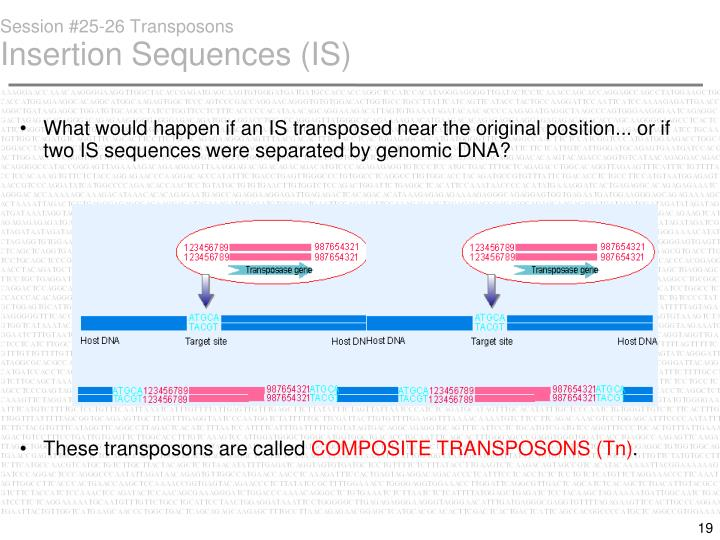 Session #25-26 Transposons