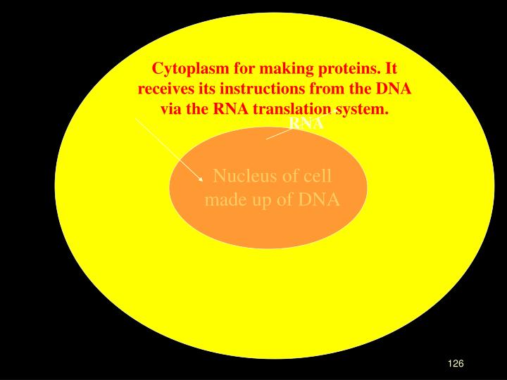 Cytoplasm for making proteins. It receives its instructions from the DNA via the RNA translation system.
