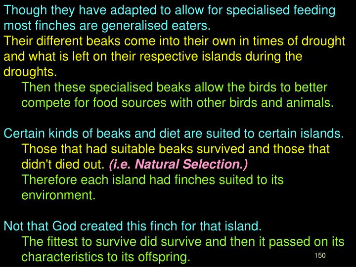 Though they have adapted to allow for specialised feeding most finches are generalised eaters.