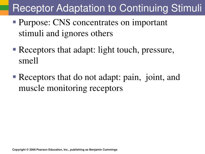 Receptor Adaptation to Continuing Stimuli