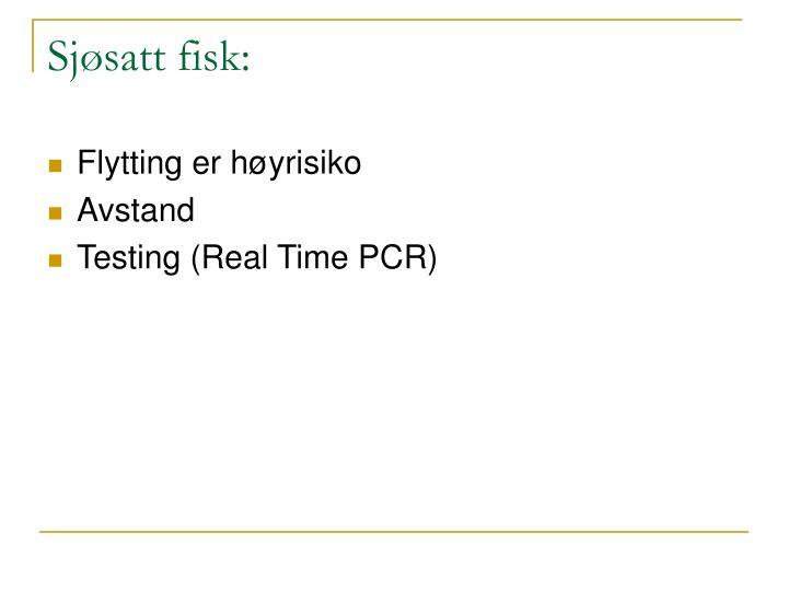 Sjøsatt fisk: