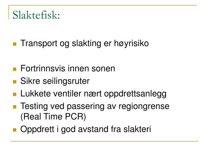 Slaktefisk: