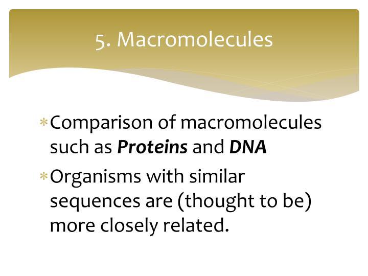 5. Macromolecules