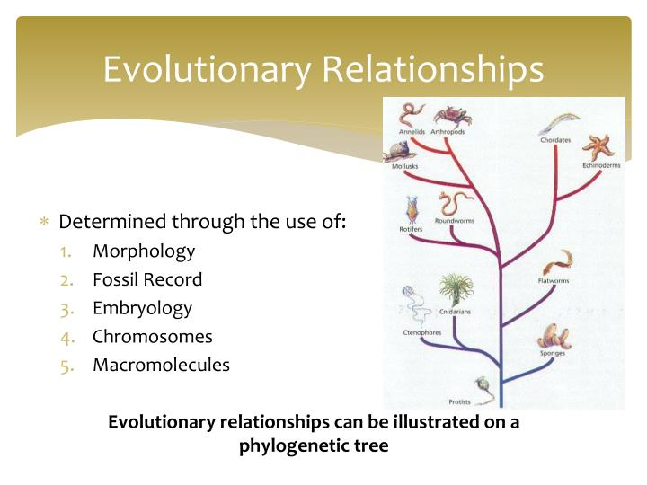 Evolutionary Relationships