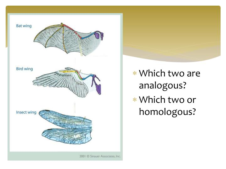 Which two are analogous?