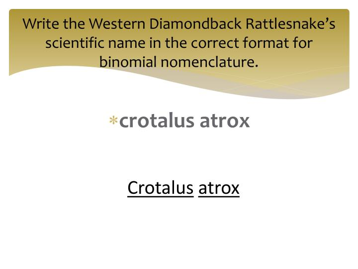 Write the Western Diamondback Rattlesnake's scientific name in the correct format for binomial nomenclature.