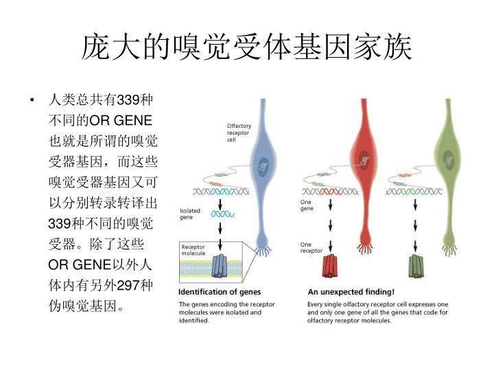 庞大的嗅觉受体基因家族