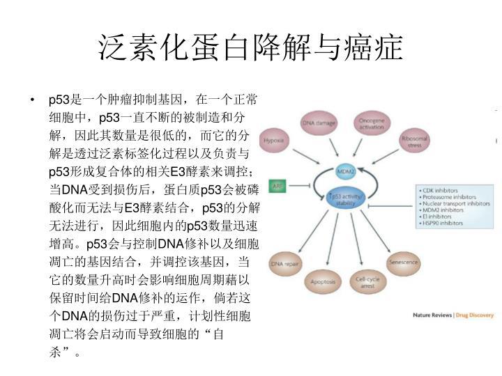 泛素化蛋白降解与癌症