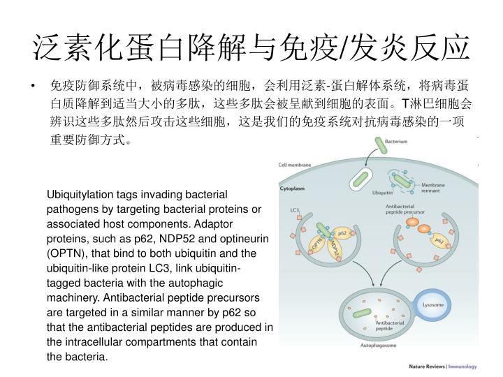 泛素化蛋白降解与免疫