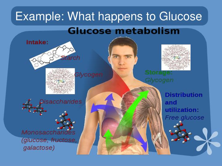 Example: What happens to Glucose