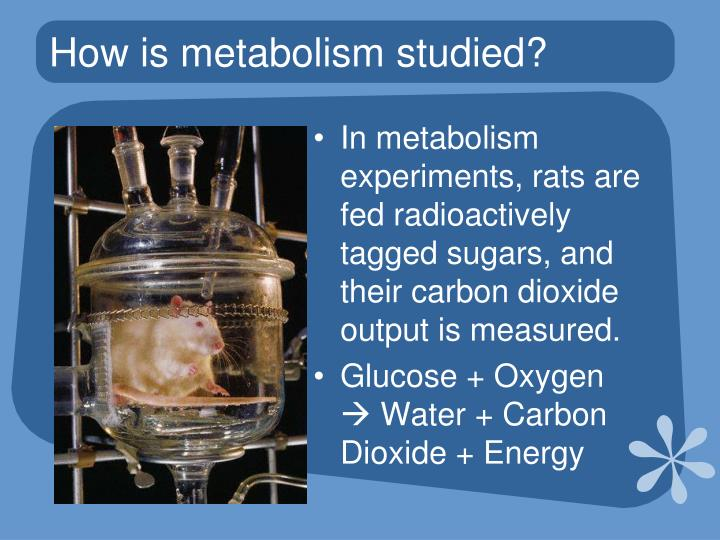How is metabolism studied?