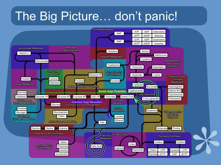 The Big Picture… don't panic!