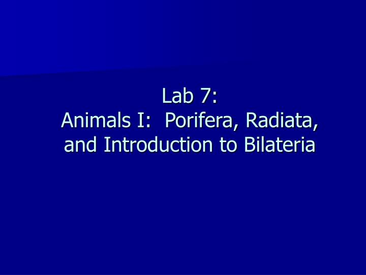 lab 7 animals i porifera radiata and introduction to bilateria