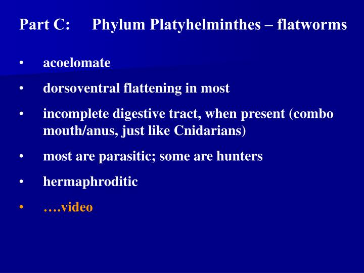 Part C:Phylum Platyhelminthes – flatworms