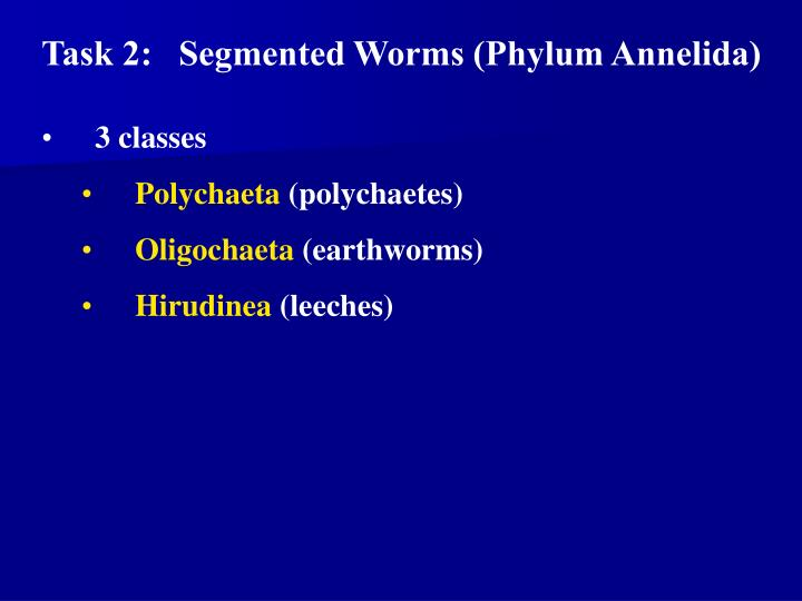 Task 2:   Segmented Worms (Phylum Annelida)
