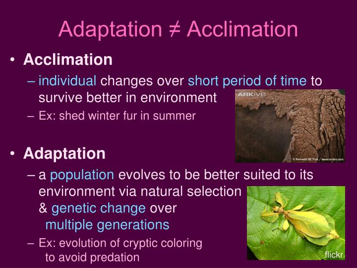 Adaptation ≠ Acclimation