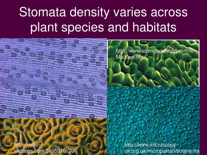 Stomata density varies across plant species and habitats