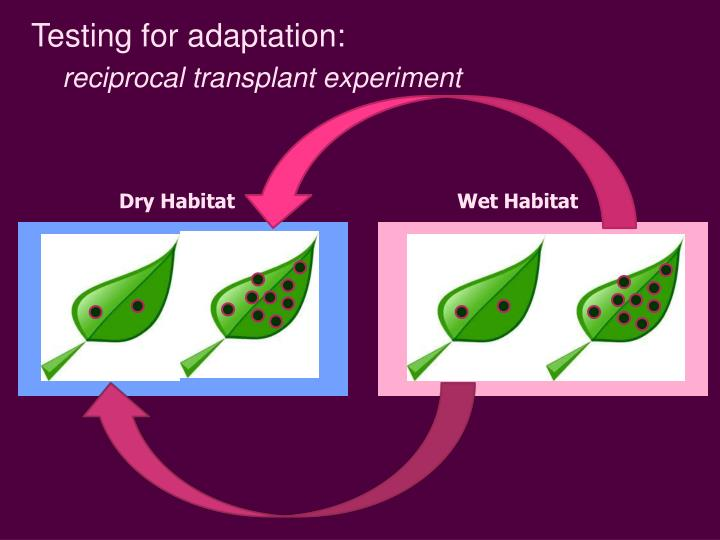 Testing for adaptation: