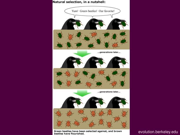 evolution.berkeley.edu