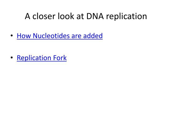 A closer look at DNA replication
