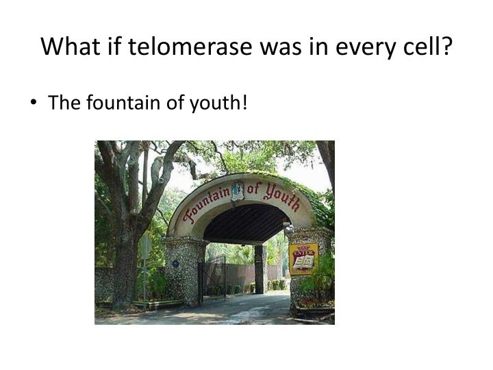 What if telomerase was in every cell?