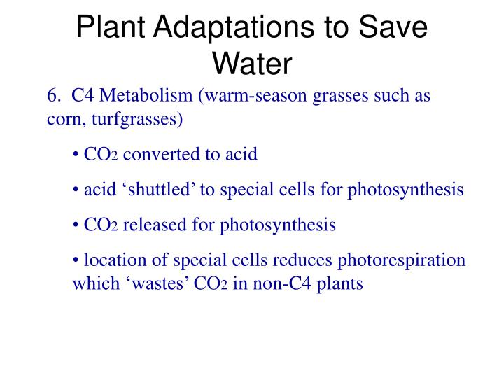Plant Adaptations to Save Water