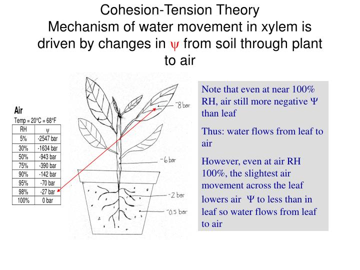 Cohesion-Tension Theory