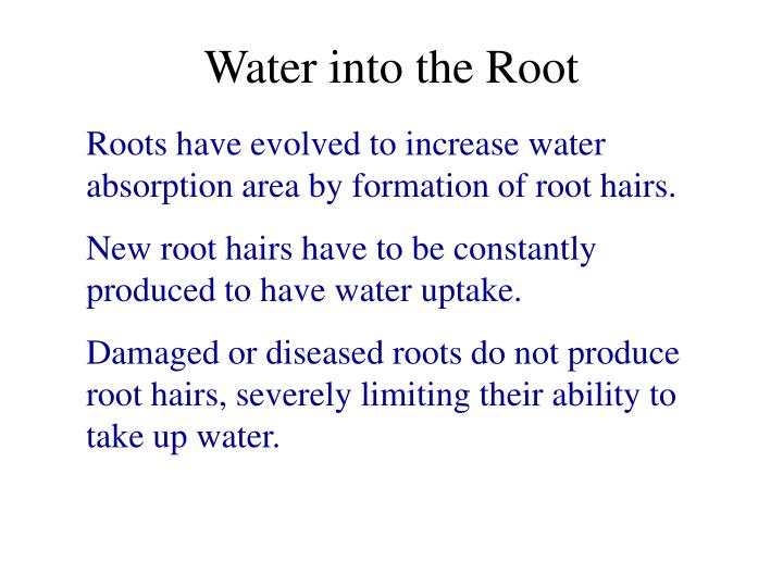 Water into the Root