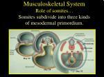 musculoskeletal system role of somites somites subdivide into three kinds of mesodermal primordium