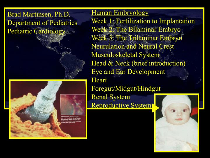 Human Embryology