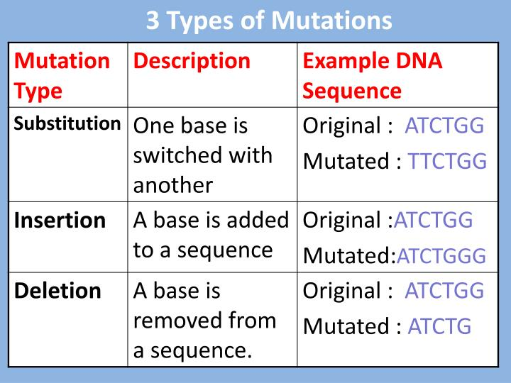 3 Types of Mutations