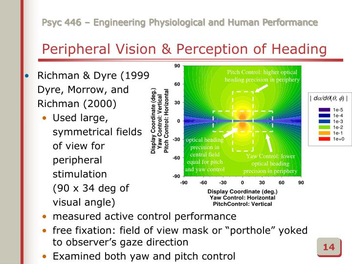 Peripheral Vision & Perception