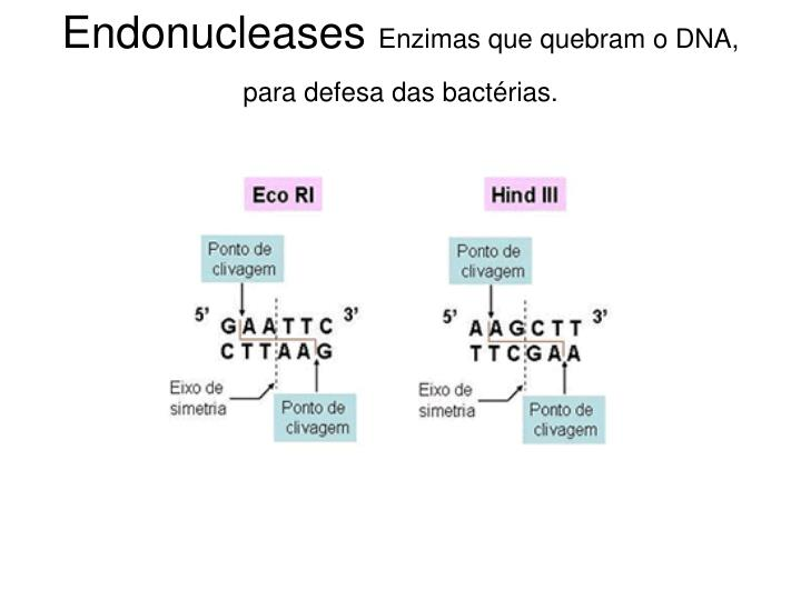 Endonucleases