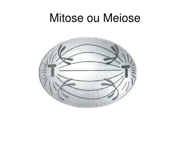 Mitose ou Meiose