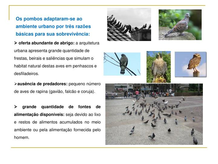Os pombos adaptaram-se ao ambiente urbano por três razões básicas para sua sobrevivência: