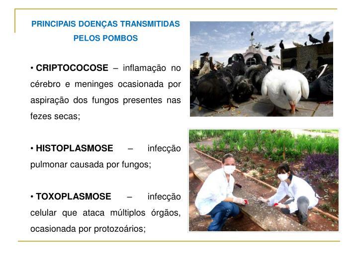 PRINCIPAIS DOENÇAS TRANSMITIDAS PELOS POMBOS