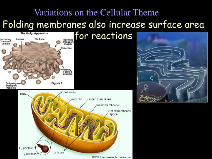 Variations on the Cellular Theme