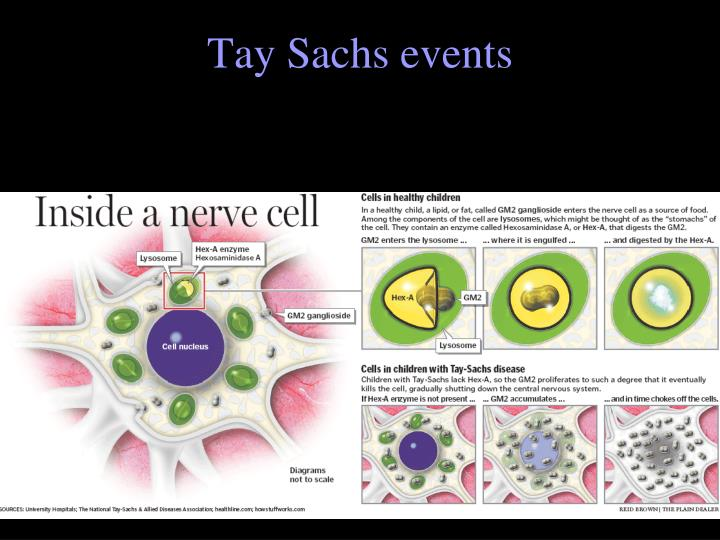 Tay Sachs events