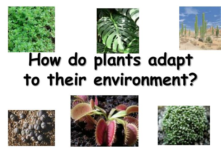 plant adaptation to their environment All organisms need to adapt to their habitat to be the kinds of food plants that so they can adapt to their environment adaptation can protect animals from.