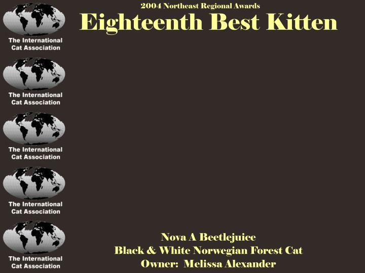 Eighteenth Best Kitten