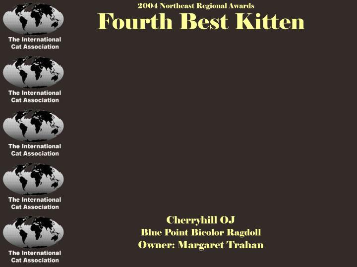 Fourth Best Kitten