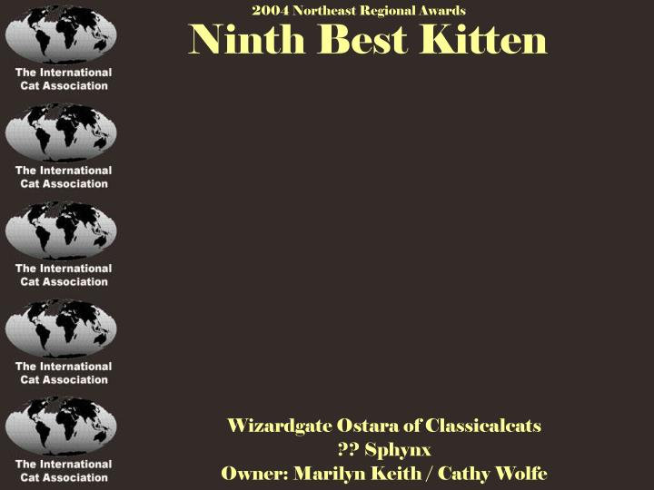 Ninth Best Kitten