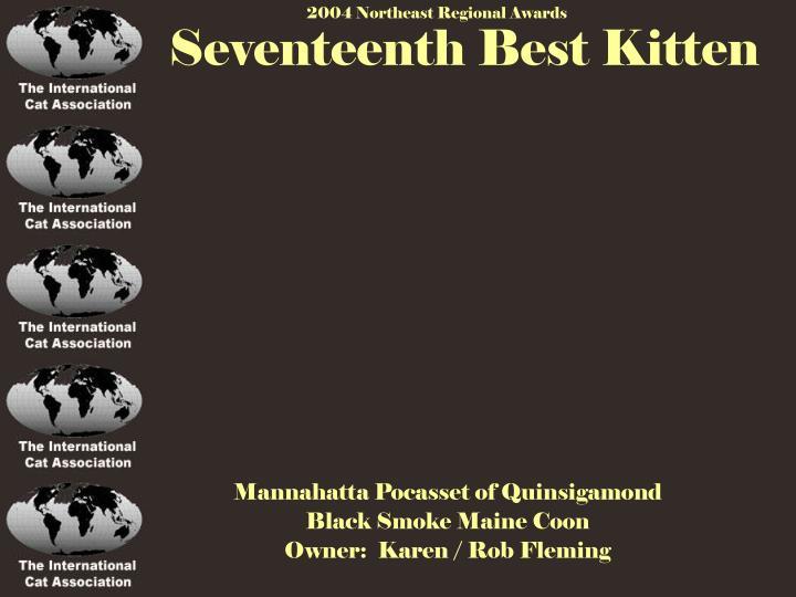 Seventeenth Best Kitten