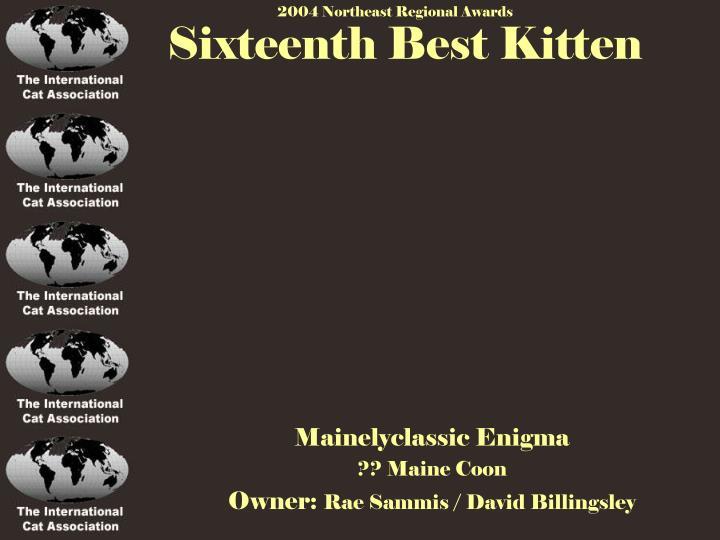 Sixteenth Best Kitten
