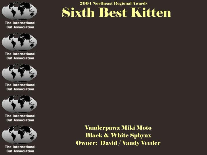 Sixth Best Kitten
