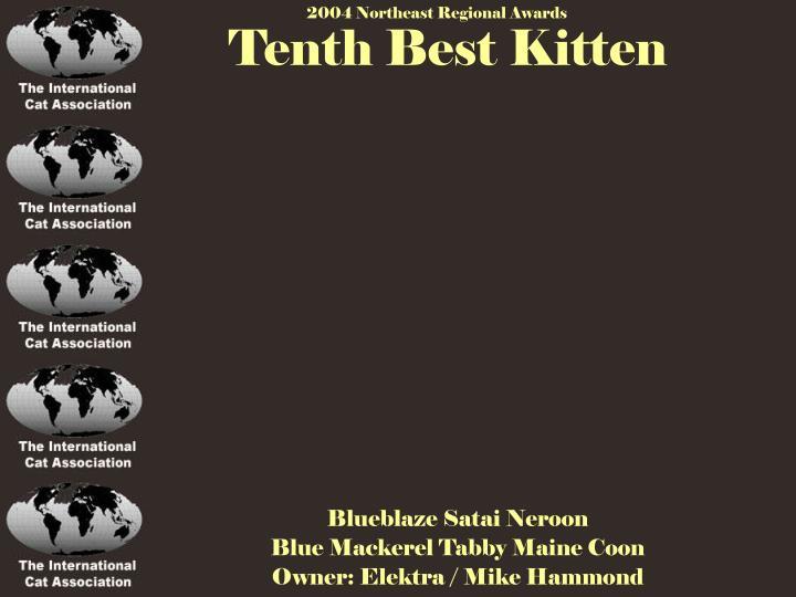 Tenth Best Kitten